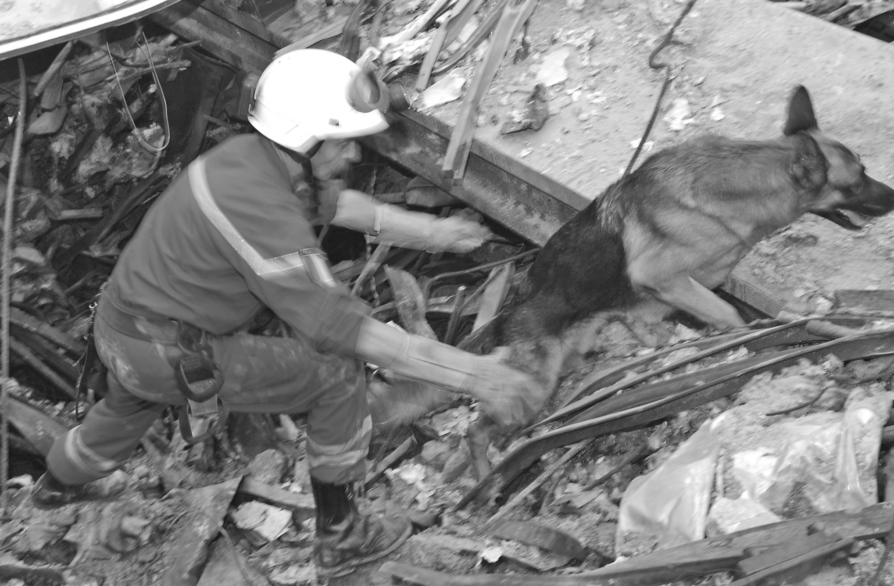 New York, NY, September 24, 2001 -- A memeber of the French Urban Search and Rescue Task Force works with his Alsation to uncover survivors at the site of the collapsed world Trade Center.  Photo by Andrea Booher/ FEMA News Photo