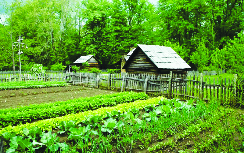 How-Organic-Agriculture-Increases-Biodiversity