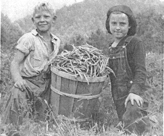 Green-Bean-Pickers-2