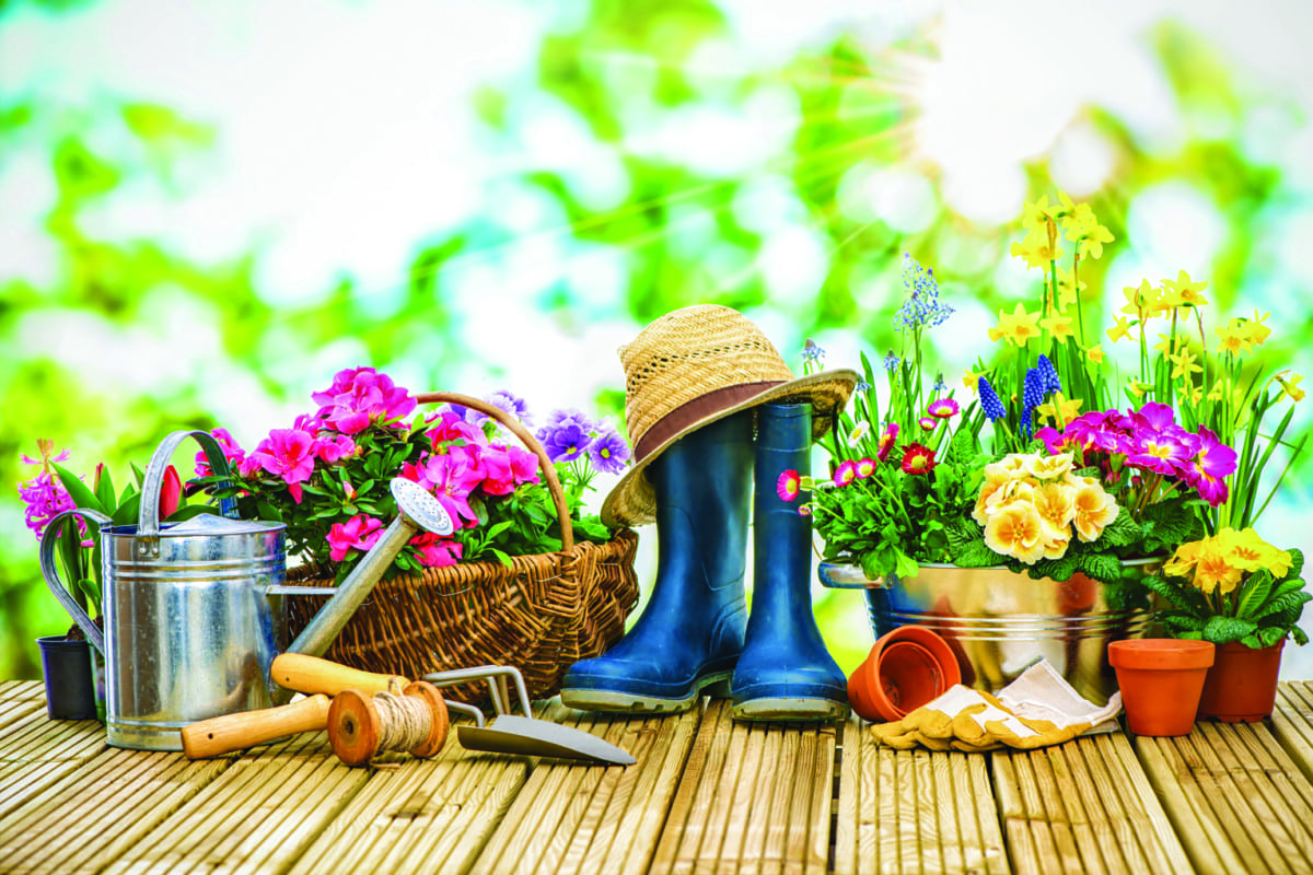 Winter Gardening Tips To Prepare For Spring The Tomahawk